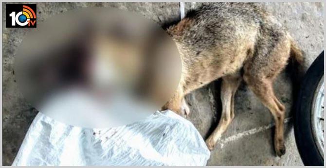 12 Narikuravars held for killing jackal by stuffing explosive inside meat