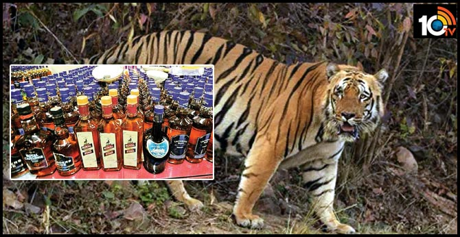 Accused killed tigress, cubs to continue illicit liquor business without fear: Forest dept
