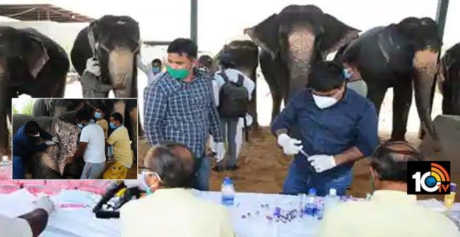 rajasthan starts testing elephants for covid-19