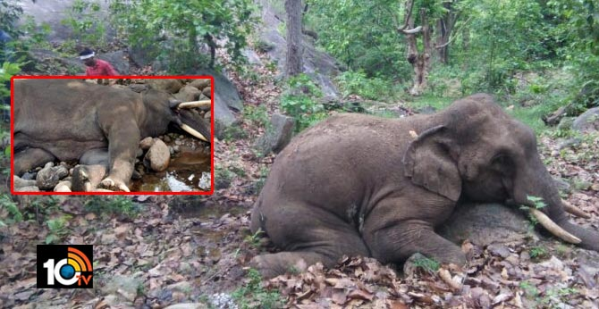 Another elephant found dead in Odisha forest