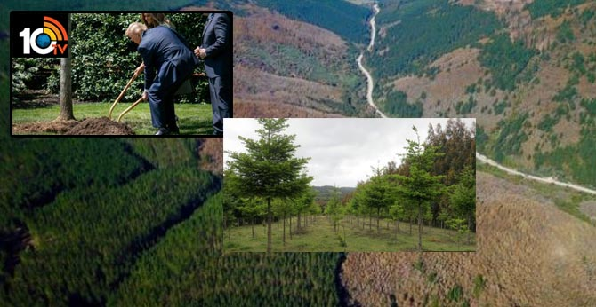 Climate change: Planting new forests 'can do more harm than good'