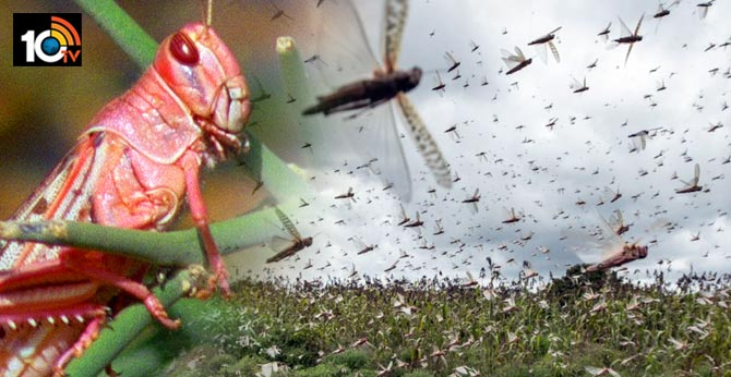 cm kcr warns of locust attack on telangana