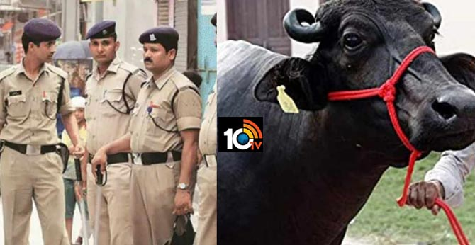 my very dear buffalo needs me Madhyapradesh cops leave application