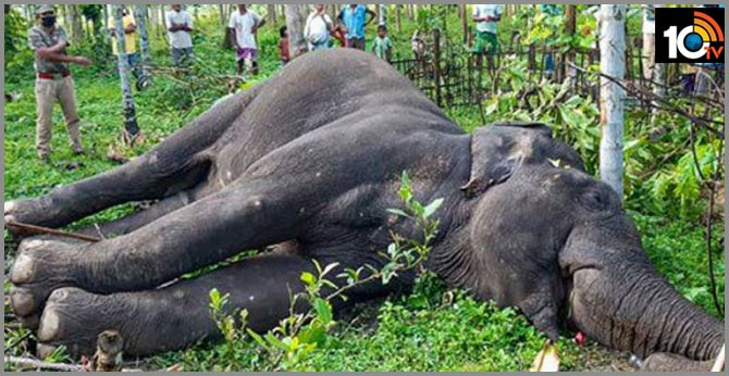 one more elephant incident in kerala  Kollam District