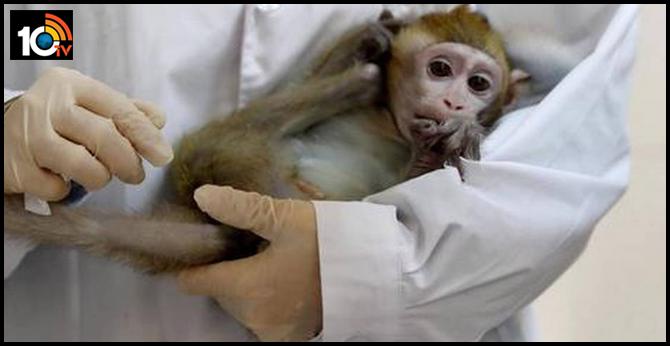 pune niv gets 30 monkeys for cinical test of corona vaccine In maharashtra