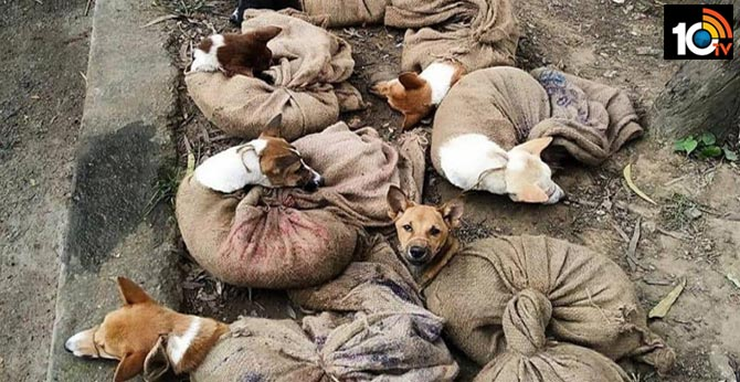 Nagaland Bans Dog Meat