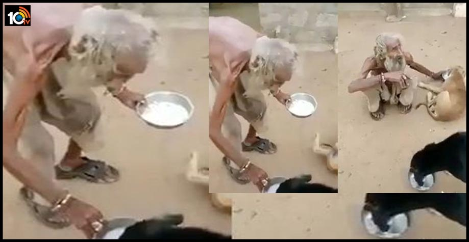 beggar-feeds-street-dogs-from-his-plate-in-viral-video