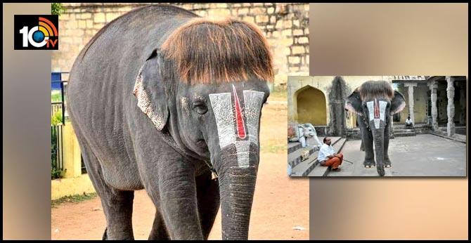 elephant-style