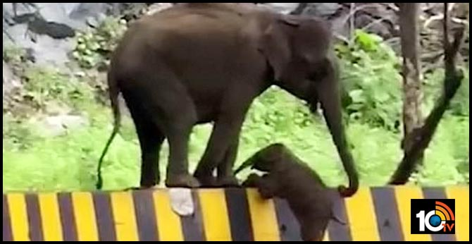 Mother uses trunk to help baby elephant climb barrier in Kerala