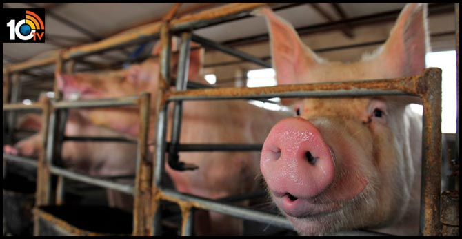 4 reasons not to worry about that 'new' swine flu in the news