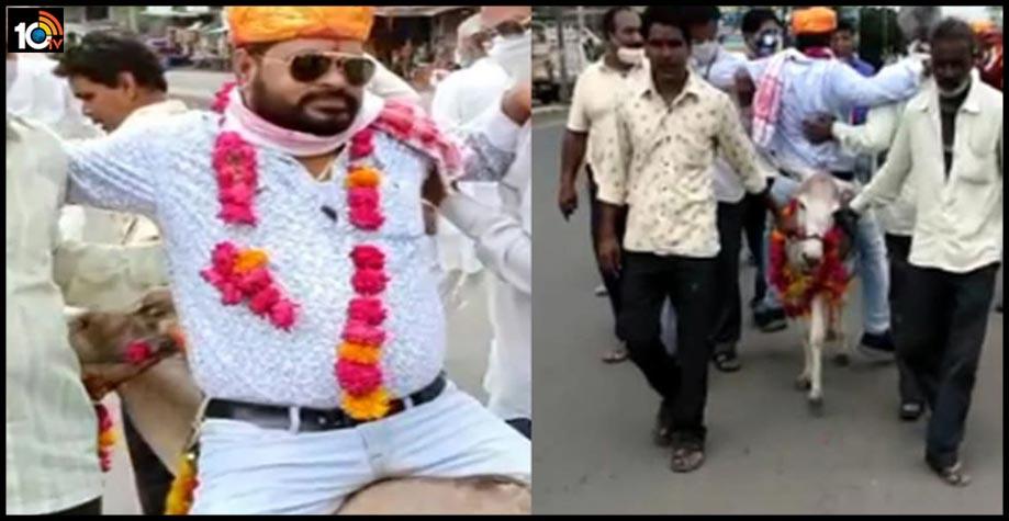 indore-groom-parade-sitting-on-donkey-in-madhyaradesh1