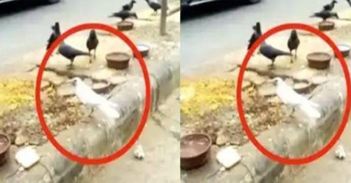 White crow in Delhi