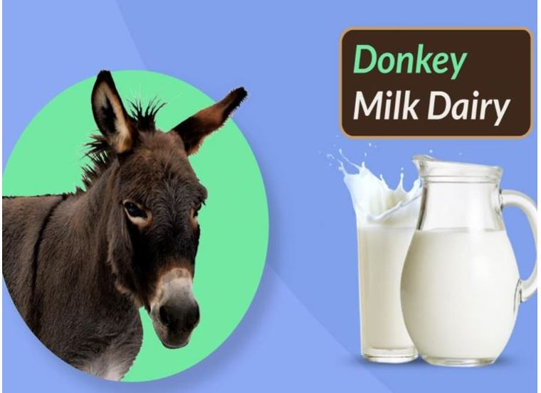 Haryana To get milk for donkey milk in India soon, a liter of milk can sell for Rs 7,000