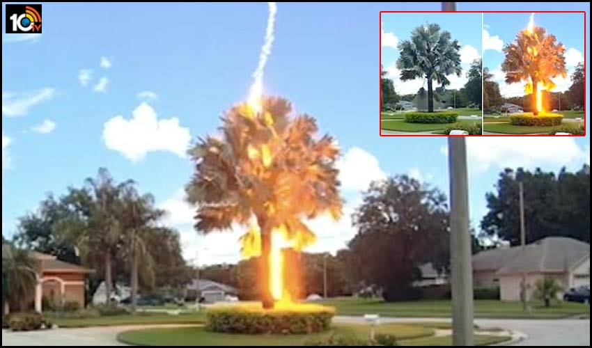 bolt-from-the-blue-strikes-palm-tree-in-florida-america