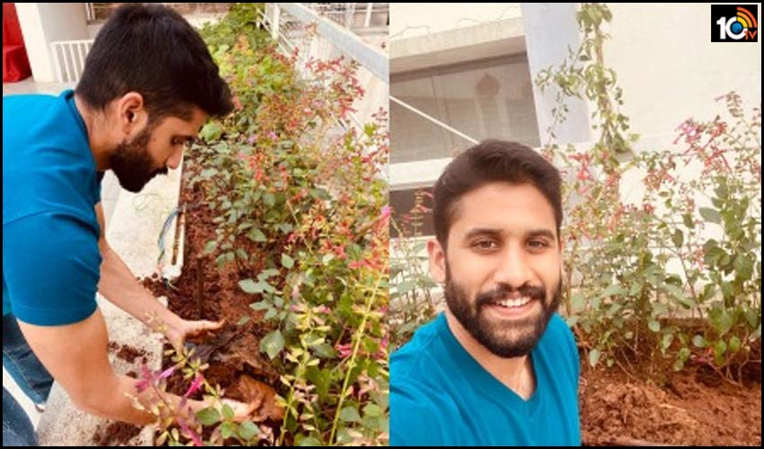 yuvasamrat-naga-chaitanya-participated-in-green-india-challenge