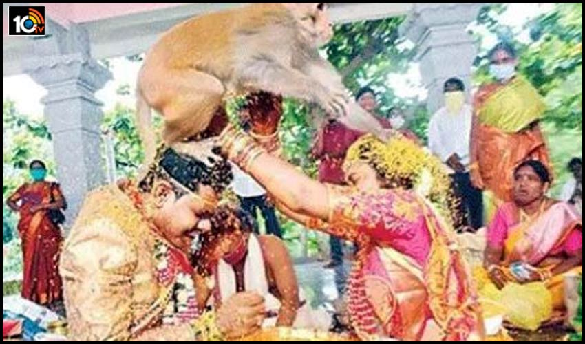 monkey-blessing-new-couple-at-the-wedding-ofter-escape-with-jeelakarra-bellam-in-mulugu