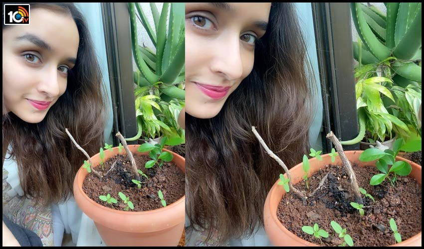 shraddha-kapoor-accepted-green-india-challenge-from-prabhas1