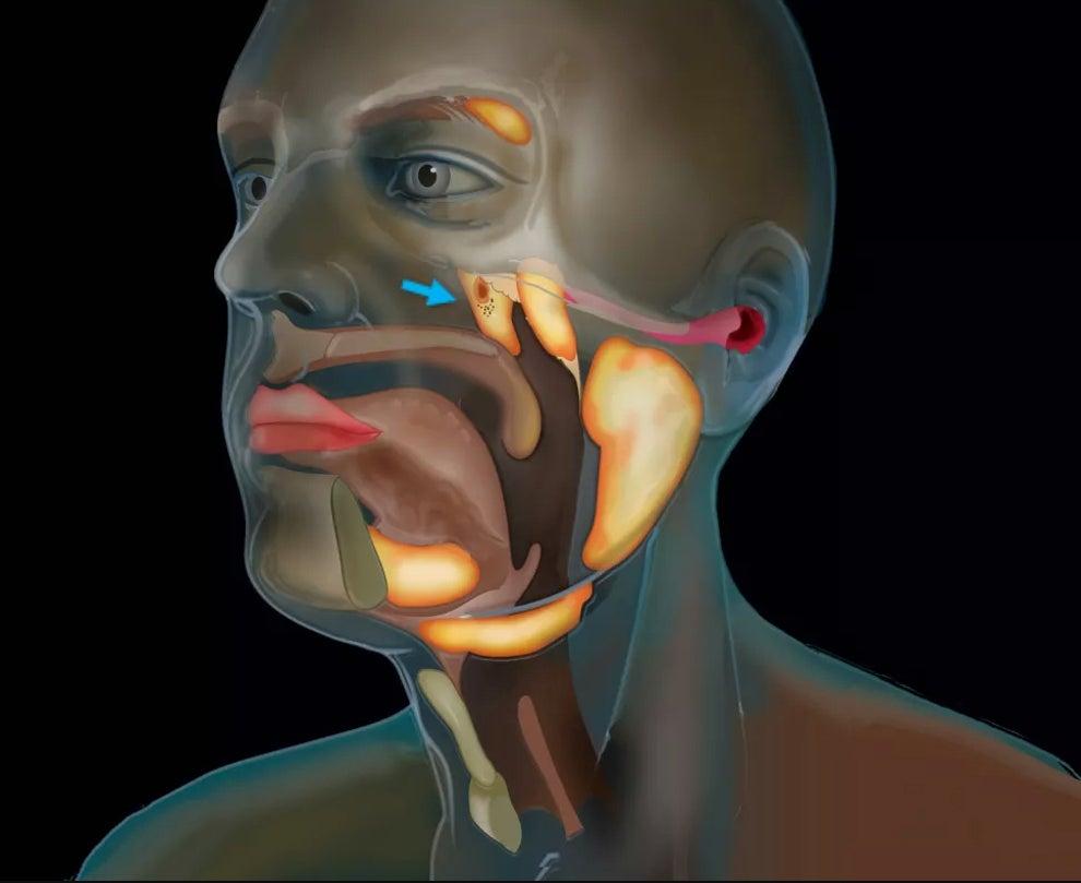 New organ in throat