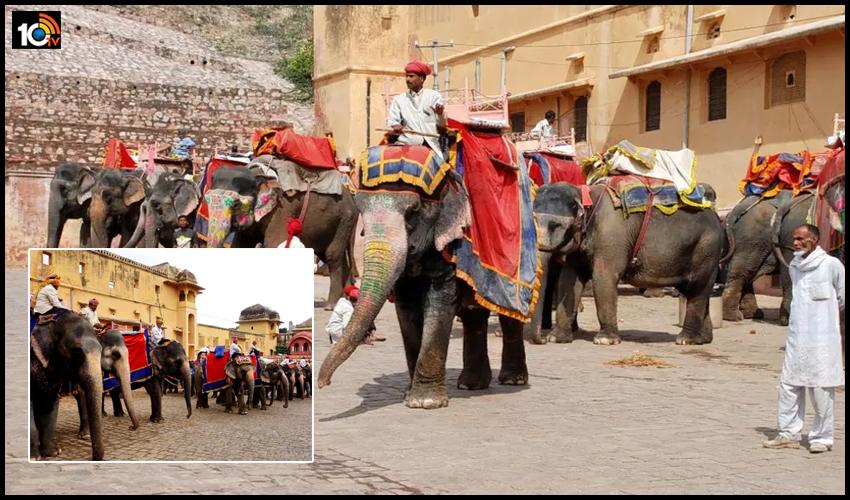 రాజసాల నజరానా : ఏనుగుల ఊరు 'హాథీగావ్' ప్రత్యేకతలు