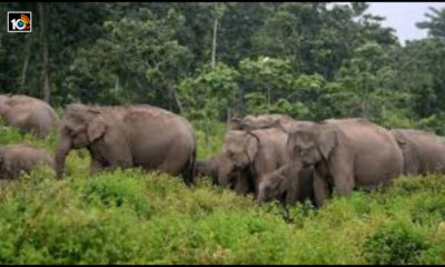 elephants-destroy-crops-in-chittoor-district-once-again1