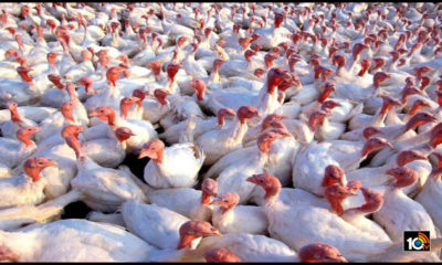 flu-spread-to-states-in-india-poultry-farm