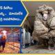 Baarack Wild sheep rescued in Australia shorn of 35 kg fleece