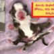 Six-Legged Miracle Puppy Born