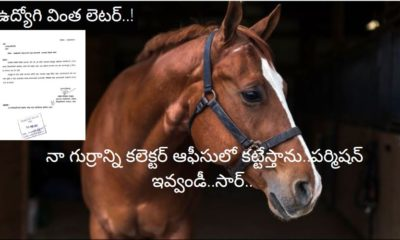 My horse on collectorate campus