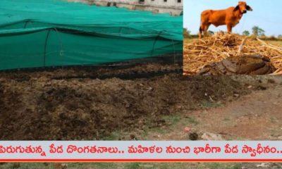 Cow Dung, theft, Chchattishgarh, CC cemara, set up, Gaudan cente,