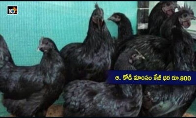 Kadaknath Chicken
