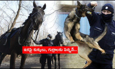 Poland Plans Pensions For Dogs, Horsess