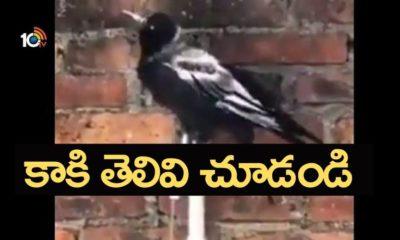 Thirsty Crow