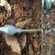 Maoist Attack on vehicles with arrow bombs in Chhattisgarh