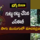 Chittoor Opium Poppy Seeds Cultivation
