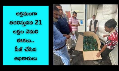 Customs Seizes 21 Lakh Pieces Of Peacock Tail Feathers
