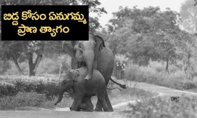 Ganga elephant