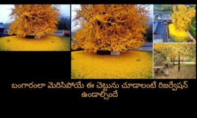 Reservation To See A Beautiful Tree