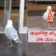 Thief Bird