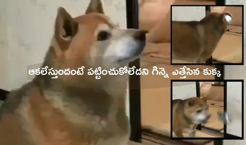 Dog Angrily