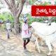 Farmer Ox