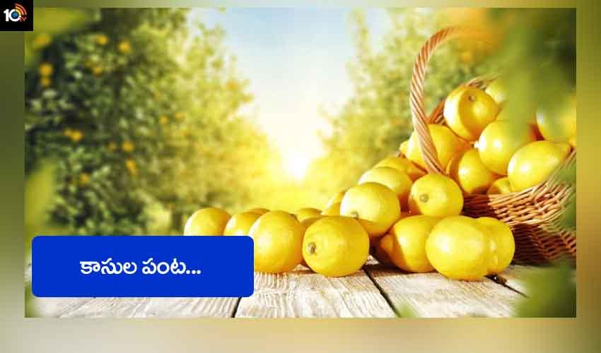 Lemon Crop