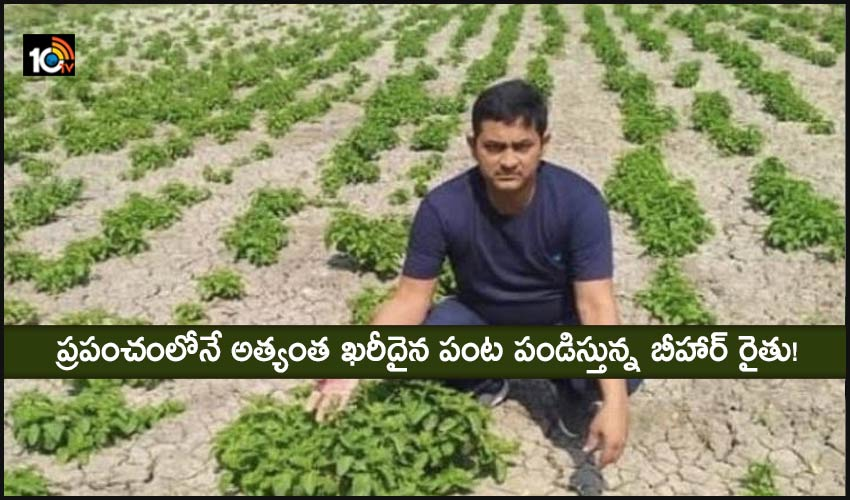 Shoots Cultivation