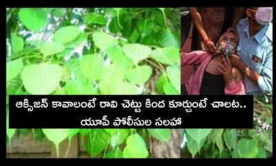 Sit Under Pipal Tree For Oxygen (1)