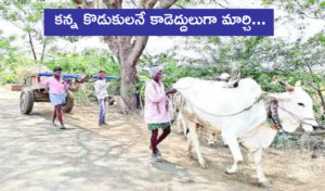 Two Sons Of Farmer Pulling Bullock Cart Instead Of Bulls