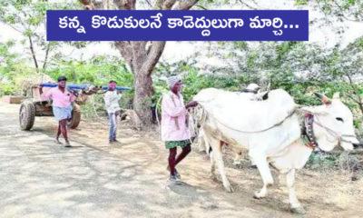 Two Sons Of Farmer Pulling Bullock Cart Instead Of Bulls
