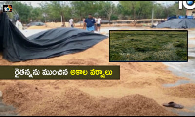 Farmers Loss Due To Heavy Rains