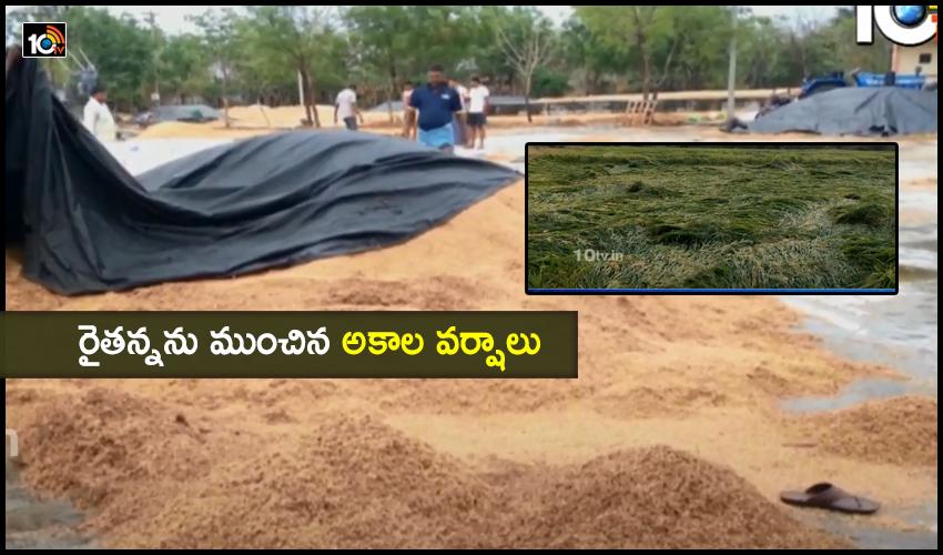 Farmers Loss Due To Heavy Rains