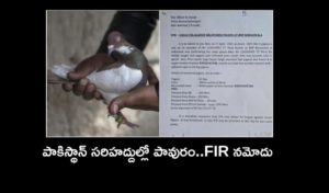 Fir Against Pigeon Caught Near Pakistan Border