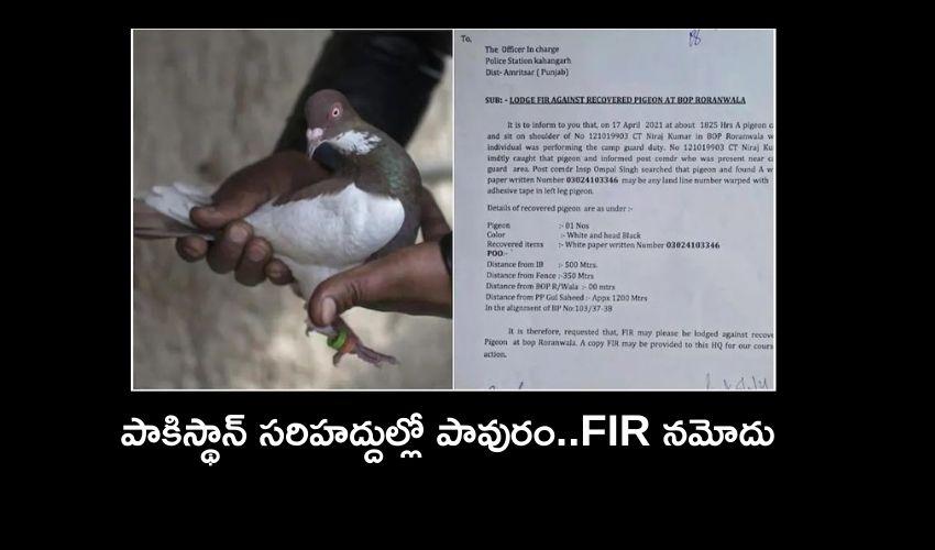 Fir Against Pigeon Caught Near Pakistan Border