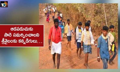 Karnataka Residents Coming To Srisailam To Present Sari To Bhramaramba